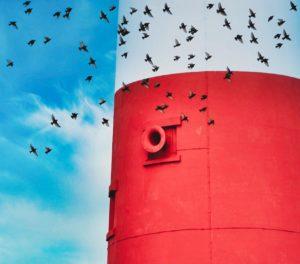 Starlings flying around Portland Bill lighthouse, Dorset.